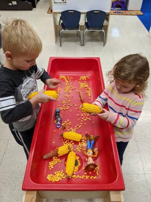 Students Exploring Corn on the Cob at Classroom Sensory Table
